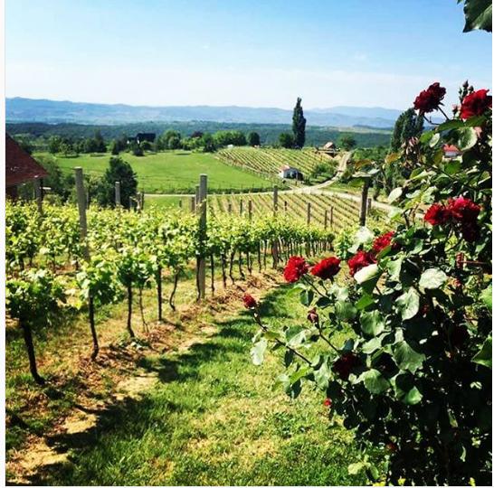 Stazama vina, ruža, okusa – upoznajte Požeško slavonski raj