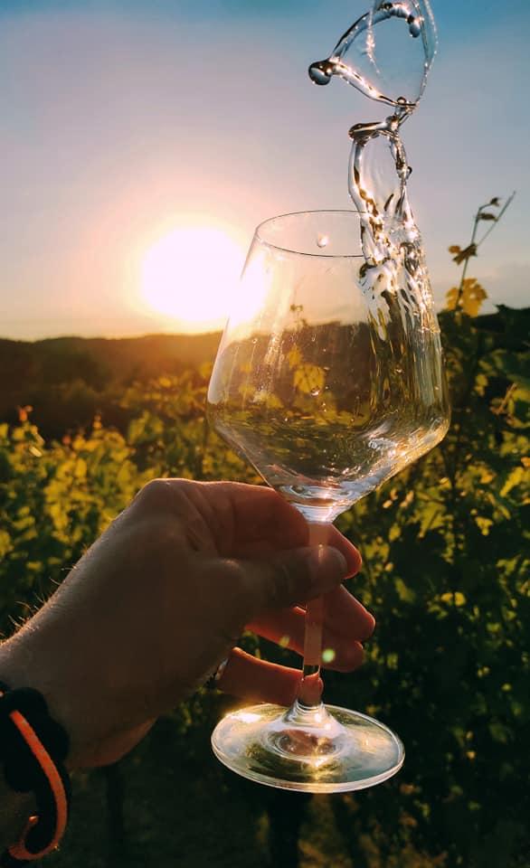 Priča o vinu, skrivenim ljepotama i radosti života